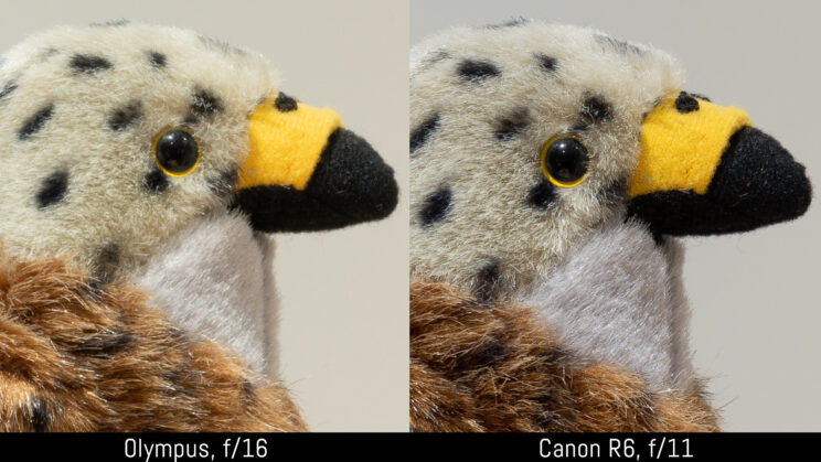 side by side crop of the stuffed toy image, showing sharpness at f16 and f11