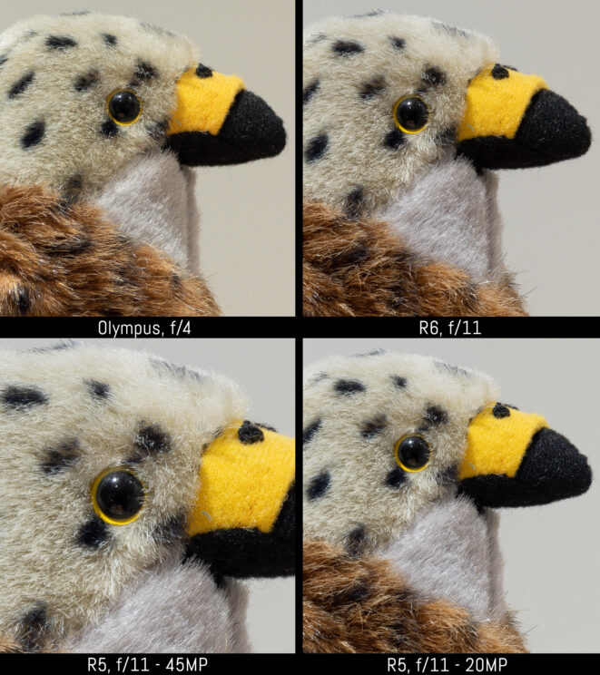 4-way comparison with the Olympus at f4, R6 at f/11, R5 at f/11 and R5 with the image resized to 20 megapixels