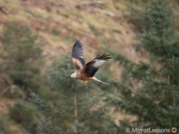 red kite flying against a busy background